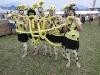 FunBeachVolley_Teams2011-01486
